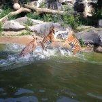 Photo of Tierpark