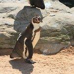 p-pick up a penguin
