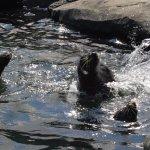 seal feeding time