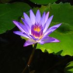 Hamamatsu Flower Park Foto