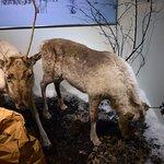Photo of Tromso Museum