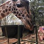 Foto de African Fund for Endangered Wildlife (Kenya) Ltd. - Giraffe Centre