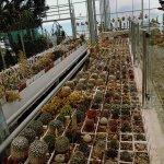 Photo de Palais et jardins botanique de Balchik