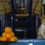 gatto e arance