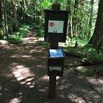 Salmon River Trail (Salmon Huckleberry Wilderness boundary).