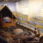 Viking temetkezés