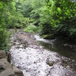 Foto di Bryngarw Country Park