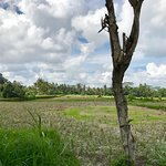 Photo of Bali Eco Cycling