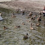 Photo of Ambleside Waterhead