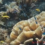 Reef Coral and fish