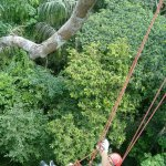Photo of Tropical Tree Climbing