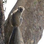 Photo de Chobe Marina Lodge