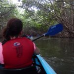Going just before sun set let's you enjoy the mangroves and HUGE Iguanas on the branches!
