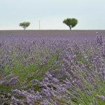 Photo of Provence Explorer - Day Tours