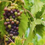 Photo of Tuscan Wine Tours by Grape Tours