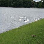 Photo of Roundhay Park