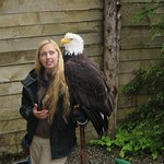 A rescued eagle