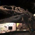 Esqueleto del carnívoro más grande encontrado