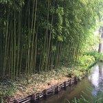 Бамбуковый лес по дороге к пруду