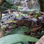 Photo of Ecocentro Danaus