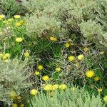 Point Lobos wildflowers