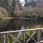 Bilde fra National Rhododendron Gardens