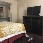 Pet friendly and older but clean and reasonably priced