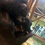 Photo of Asahiyama Zoo