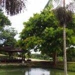 Tropical Fruit Farm Foto
