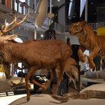 Photo de Musée royal d'Écosse