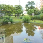 That pond can be viewed from dinning room. Entertaining with natural beauty.