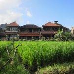 Rice Field infront of Danasari Homestay