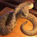 Nice photo op with the stuffed rattlesnake