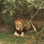 Photo of Waterbuck Safaris