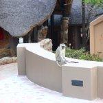 Photo de Zulu Nyala Game Lodge