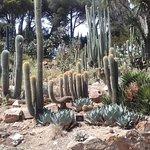 superbe collection de cactus