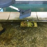 Don't be fooled by the hotel website pics of the pool!! This is what you'll find. Yuck! Gross un
