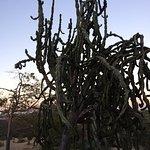 cactus tree?