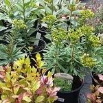 Plants for sale at Myddleton House!