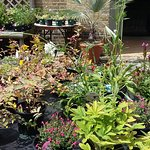 Plants for sale at Myddleton House!