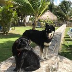 The luckiest dogs in Belize!