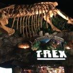 T-Rex Foto