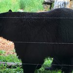 Photo of North American Bear Center