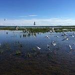 Lake Engure Nature Park