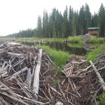 These dams show the busy little Beaver's job
