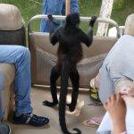 Monkey island tour
