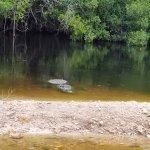 Jungle Erv's Everglades Airboat Tours รูปภาพ