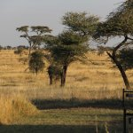 Tortillis camp in Serengeti