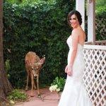 Bride and Doe by Gazebo