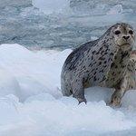 Seal near the Northwestern glacier